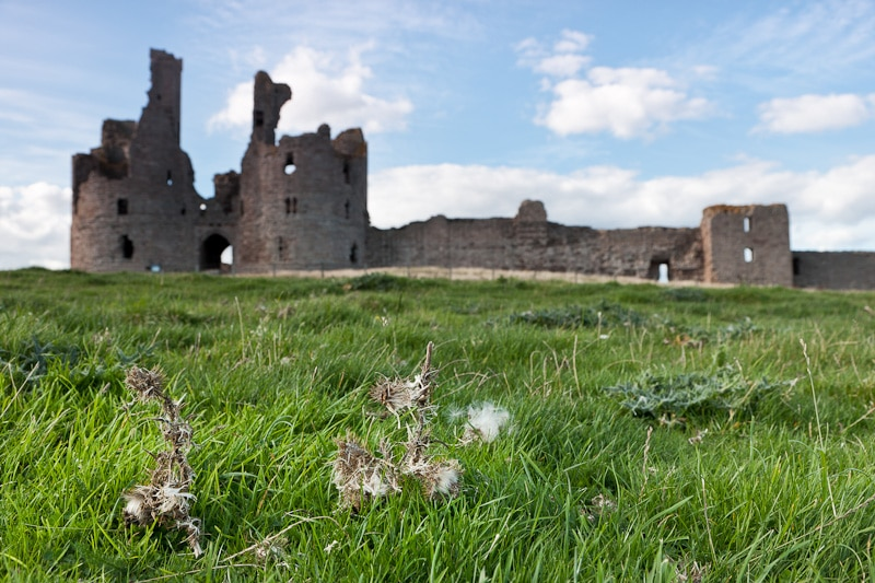 photograph of Dunstanburgh Castle ruins with lush green grass and withered nettle plant in the foreground.